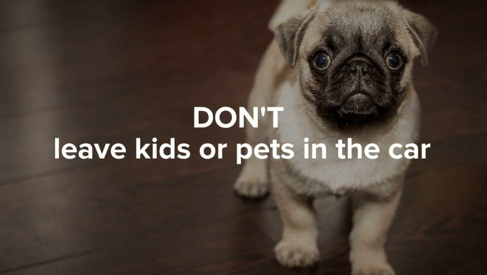 When it is hot out, do not leave pets or kids in the car.