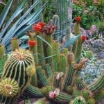 Gardens in Arizona – Summer is a Great time to visit!