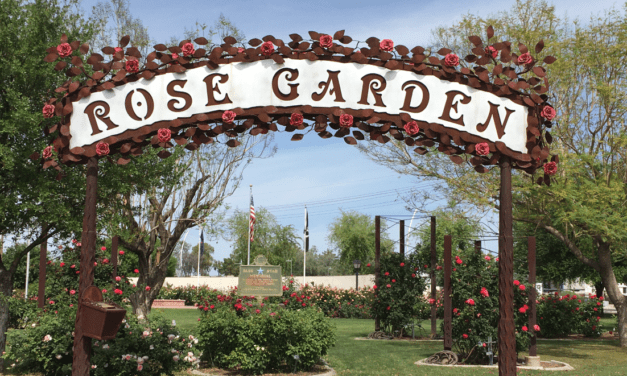 Stop and Smell the Roses in Mesa, Arizona